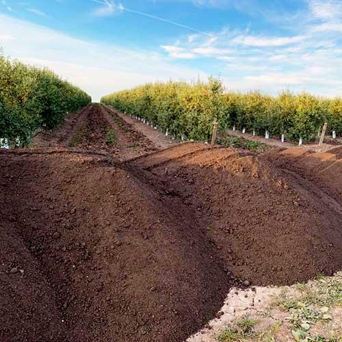 Fertilizantes orgánicos en polvo para olivo.