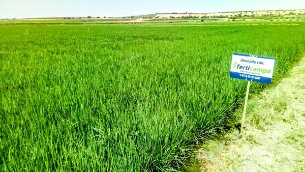 Plantación con fertilizantes orgánicos líquidos de Ferticampo